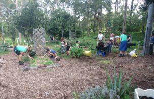 Wilkins Green School and Community Garden
