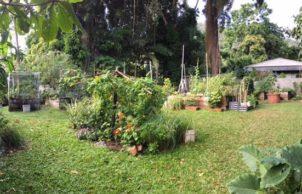 Stratford Community Garden